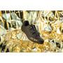 Northwave Revolution 2 Schuhe Herren black/gold