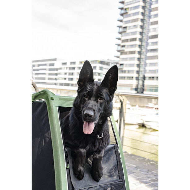 Croozer Dog Bruuno Hundeanhänger kieferngrün